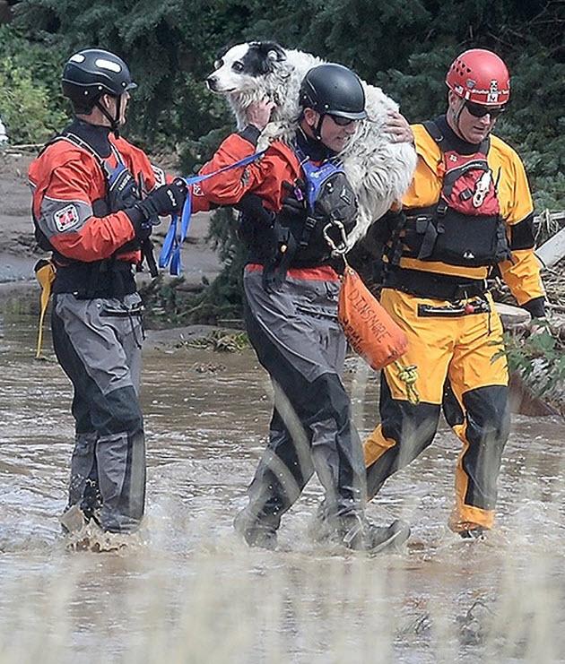 Dog Evacuation
