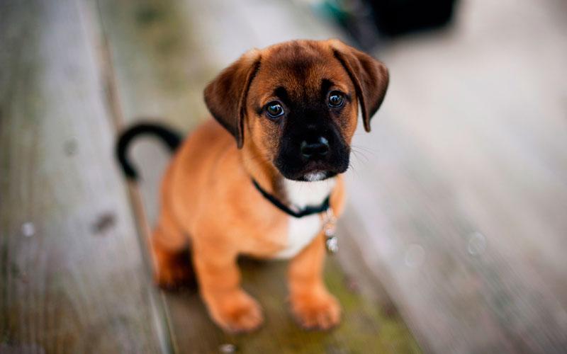Cute puppie