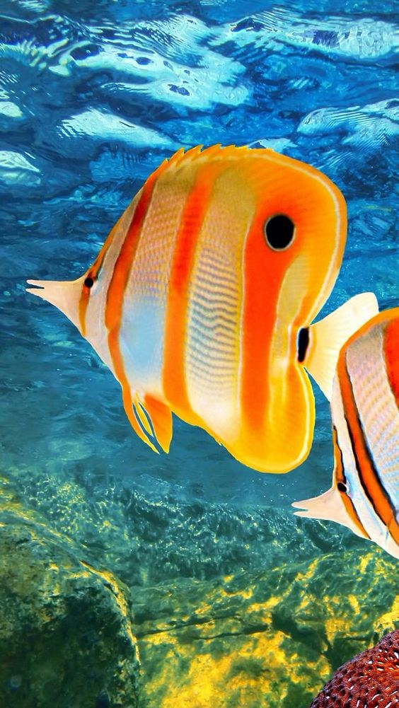 Refreshing Fascinating And Pretty Fish Photography ...