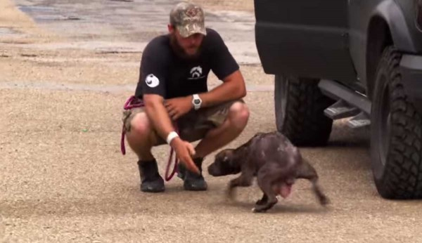 The Moment This Dog Is Reunited With Her Missing Puppies Is Just Beautiful.
