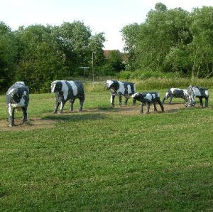 concrete-cows
