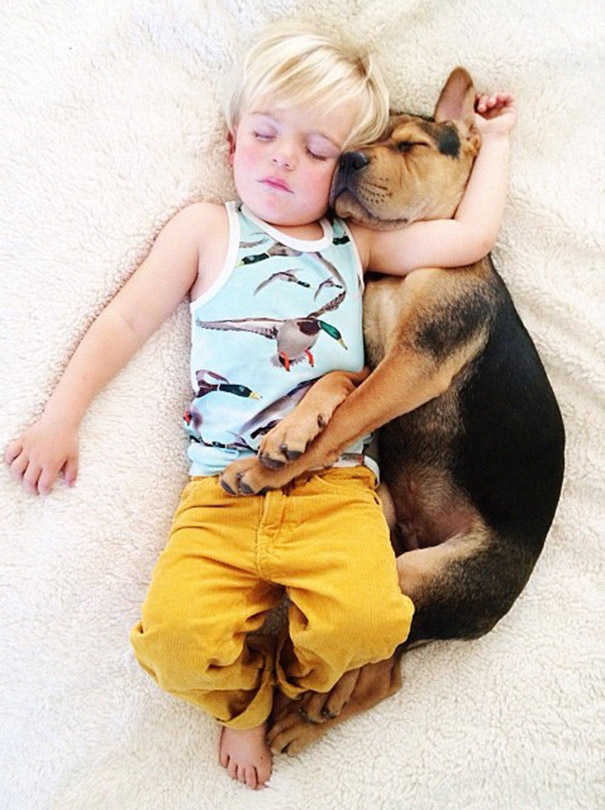toddler-naps-with-puppy-theo-and-beau-2-18.jpg