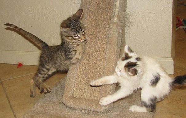 mercury-two-legged-kitten-5