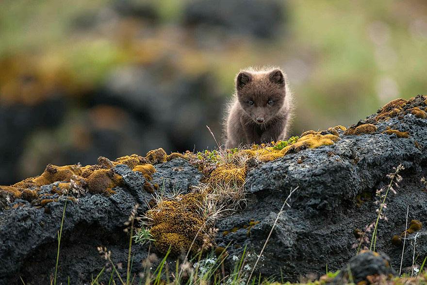 amazing-fox-photos-24