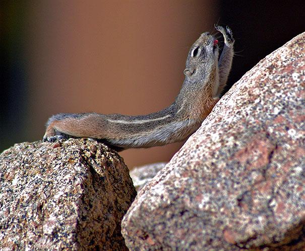 funny-animals-doing-yoga-28
