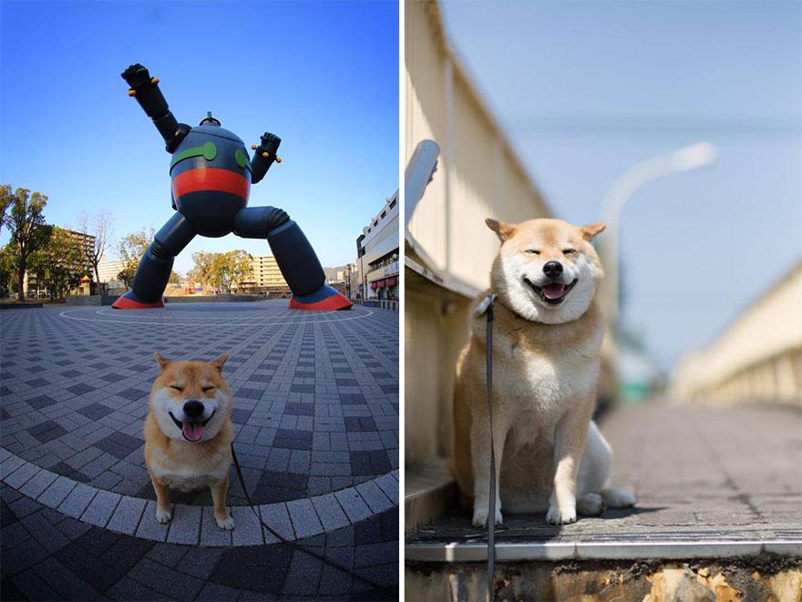 happy-dog-maru-shiba-inu-39