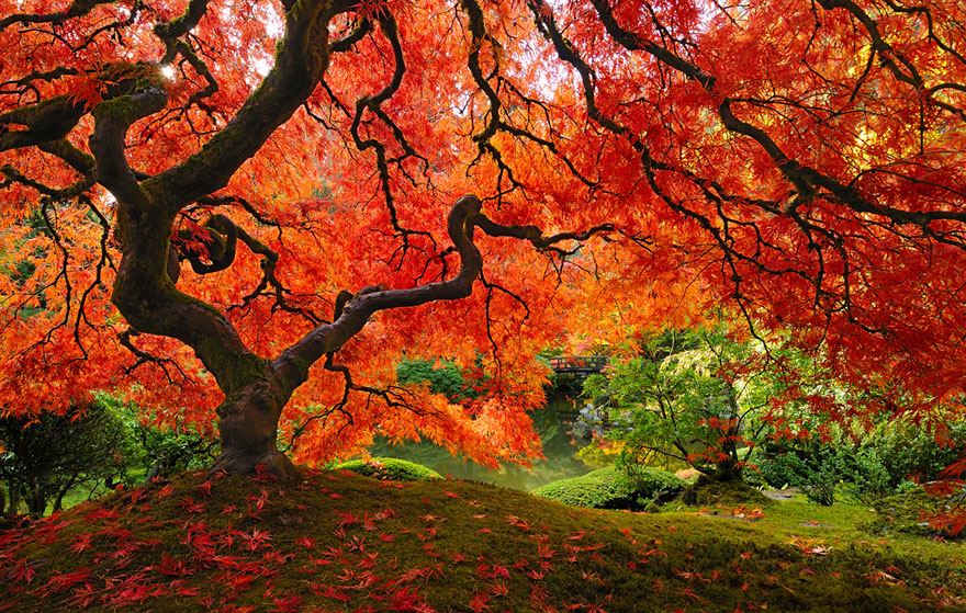 amazing-trees-8