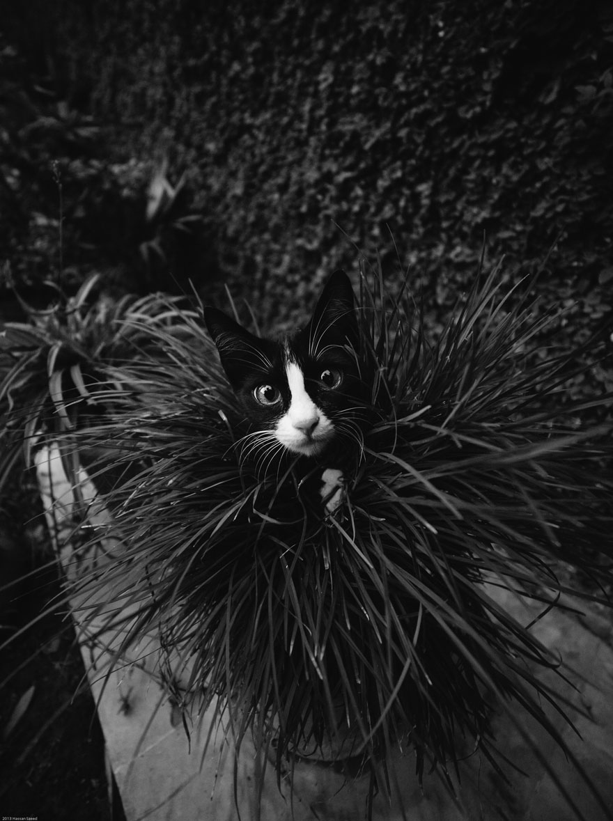 cat-black-and-white-photography-20