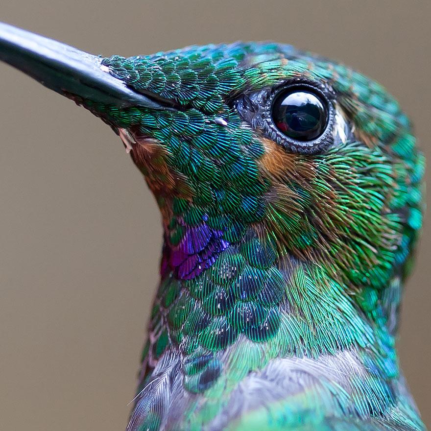 cute-beautiful-hummingbird-photography-1