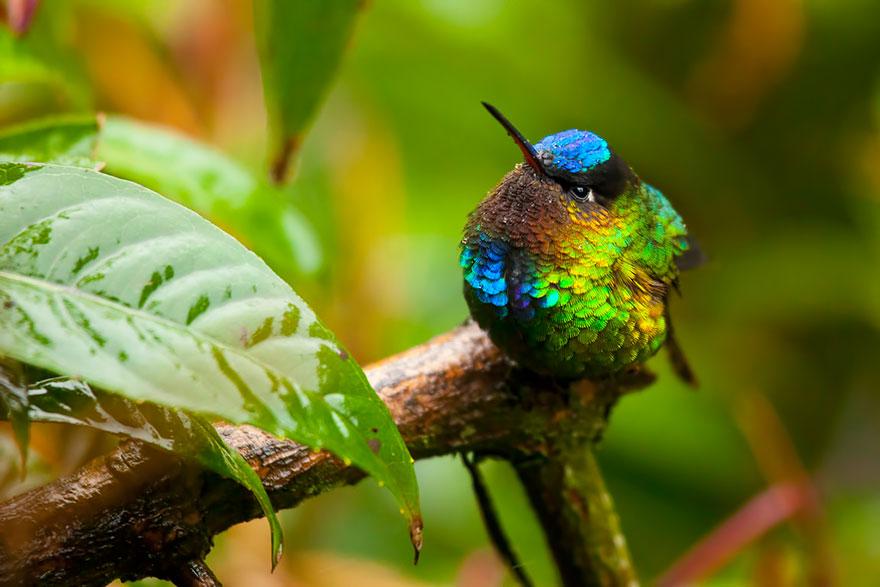 cute-beautiful-hummingbird-photography-2
