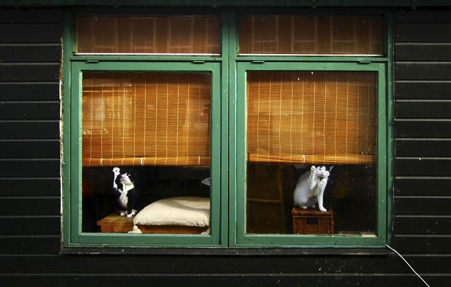 animals-looking-through-the-window-13