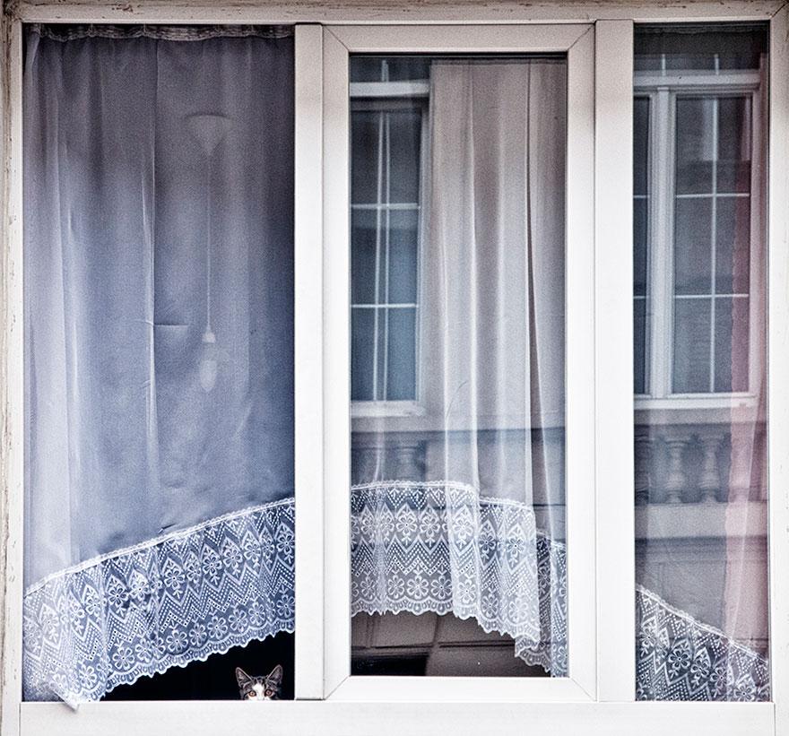 animals-looking-through-the-window-15