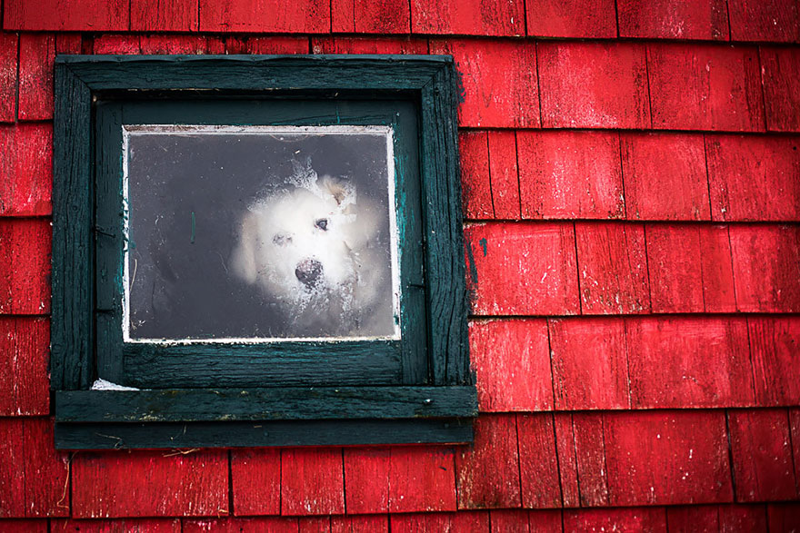 animals-looking-through-the-window-6