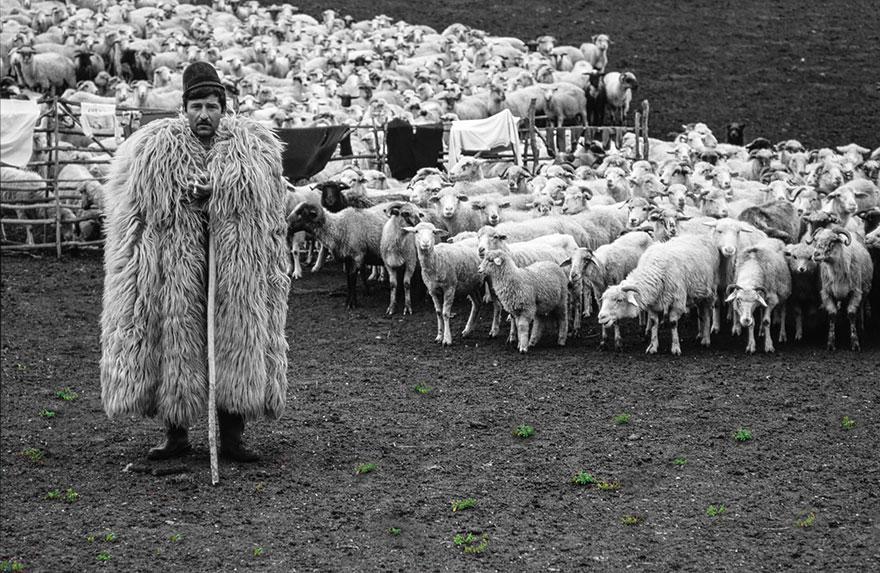 sheep-herds-around-the-world-12