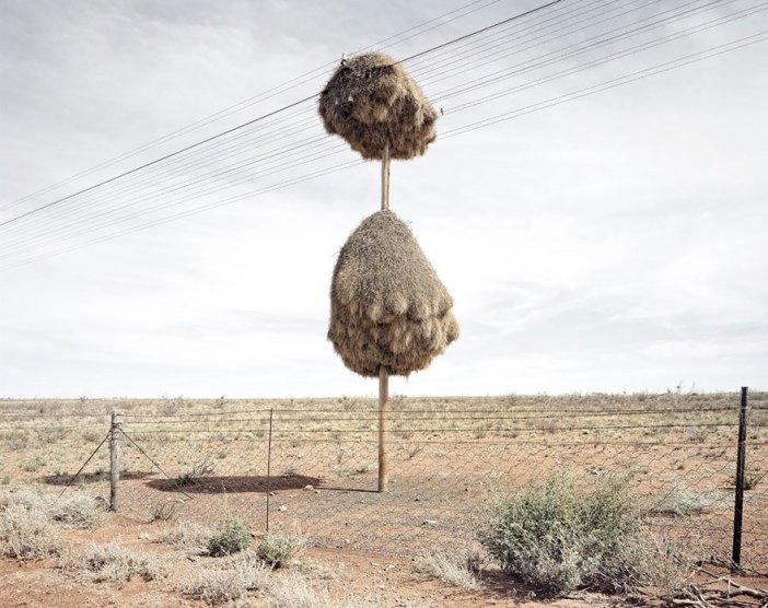 animal-architecture-nests-1-4
