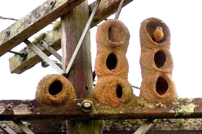 animal-architecture-nests-2-1