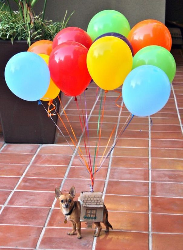 Up! House Dog
