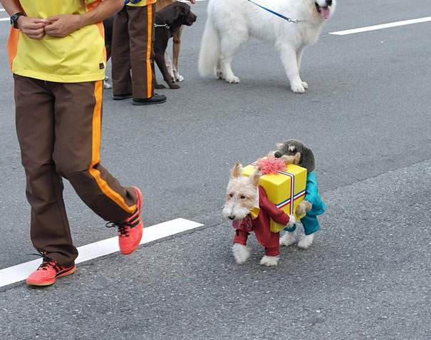 Dog(s) Carrying A Present