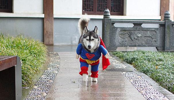 Super Husky