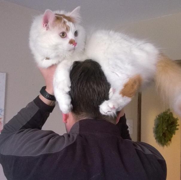 Llevar gatos vivos como sombreros es la última y más adorable moda ... 8df1b6f63ce