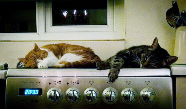 animales-que-aman-al-calor (10)