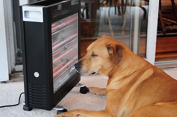 animales-que-aman-al-calor (5)