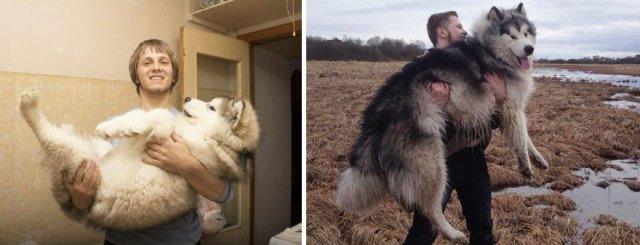 antes-despues-perros-creciendo (16)