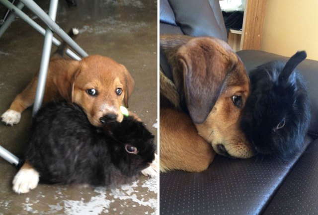 antes-despues-perros-creciendo (17)