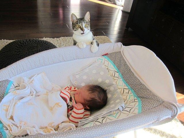 duenos-olvidaron-avisar-gata-sobre-bebe-roxy (1)