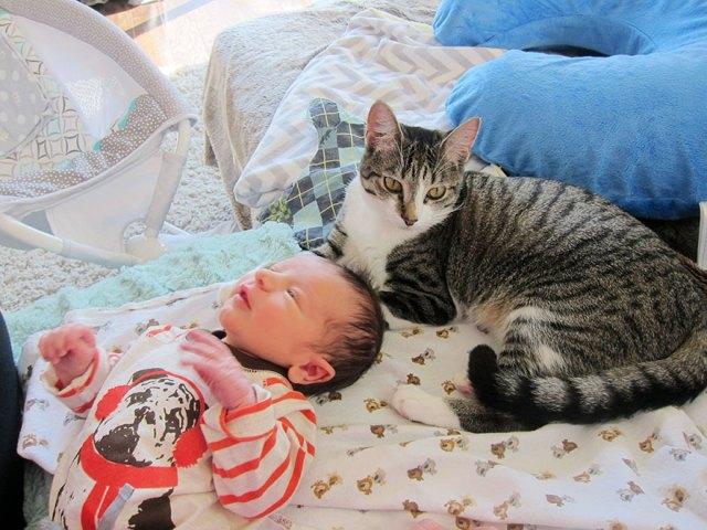 duenos-olvidaron-avisar-gata-sobre-bebe-roxy (2)