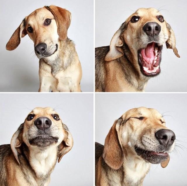 fotomaton-adopcion-perros-organizacion-humanitaria-utah (10)