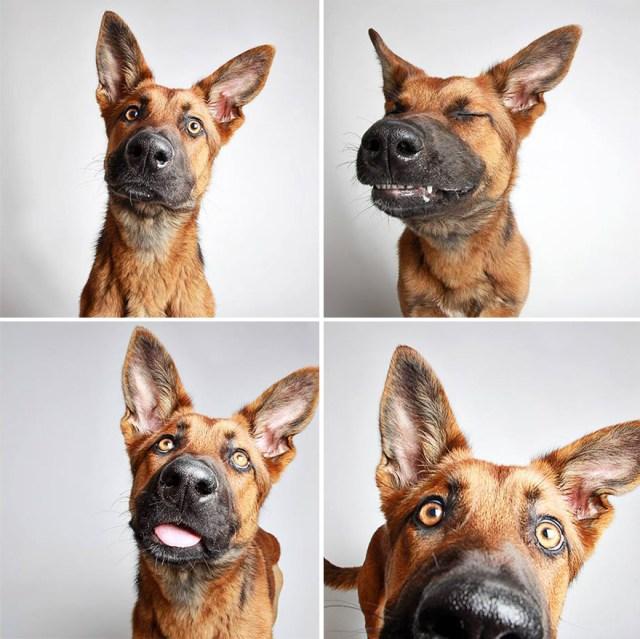 fotomaton-adopcion-perros-organizacion-humanitaria-utah (12)