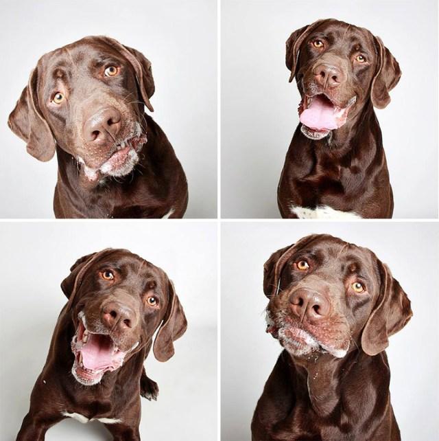 fotomaton-adopcion-perros-organizacion-humanitaria-utah (7)