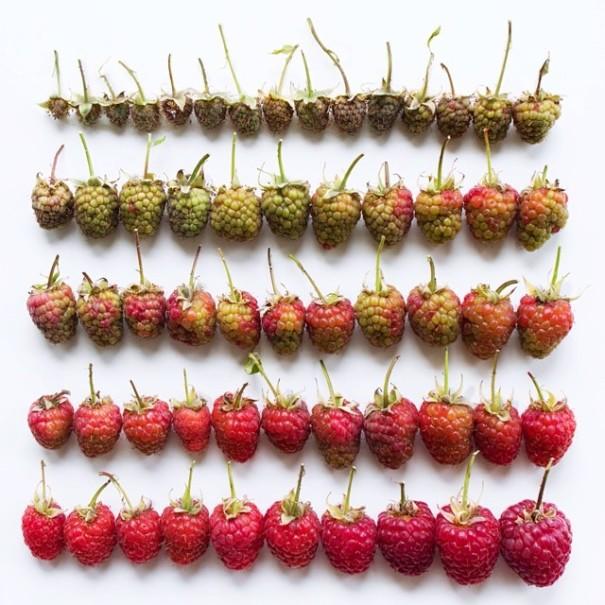 fotos-comida-ordenada-colores-foodgradients-brittany-wright (12)