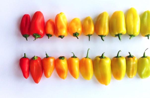 fotos-comida-ordenada-colores-foodgradients-brittany-wright (13)