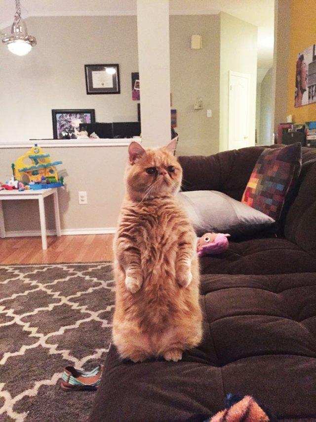 george-gato-bipedo-2-patas (1)