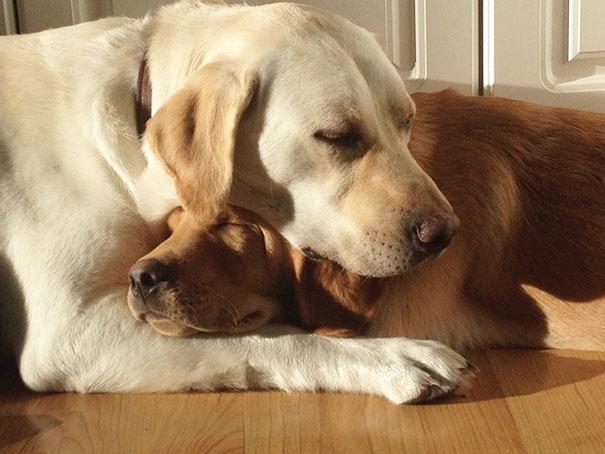 perros-mejores-amigos (18)