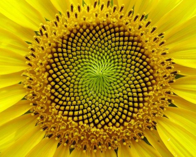 plantas-geometricas (11)