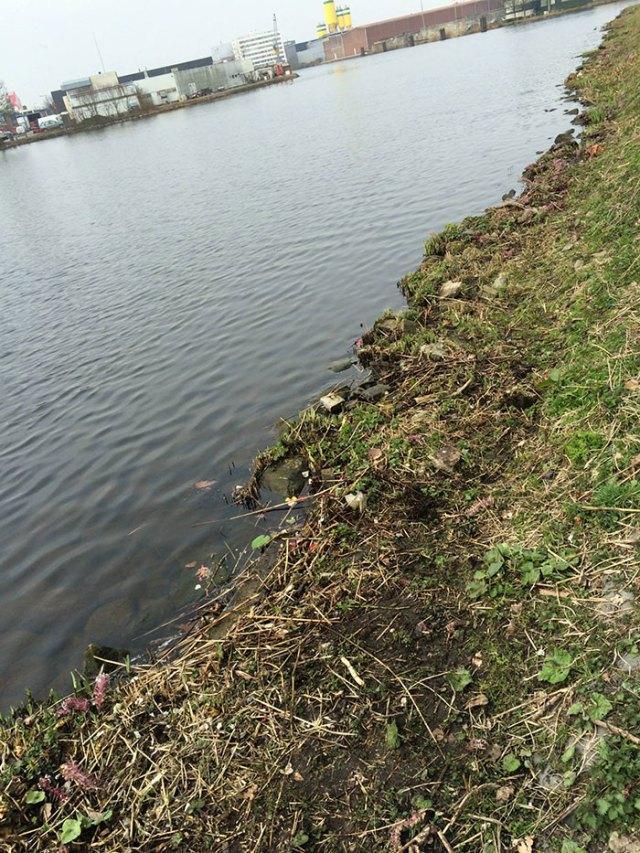 proyecto-recoger-basura-diariamente-pigswegetwhatpigsdeserve-holanda (16)