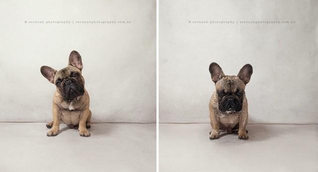 retratos-animales-perro-seco-perro-mojado-serenah-hodson (3)