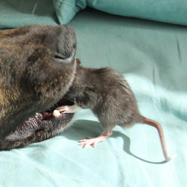 amistad-animal-riff-rata-osiris-perro (8)