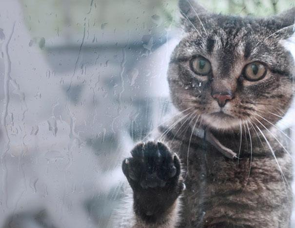 animales-pidiendo-entrar (10)