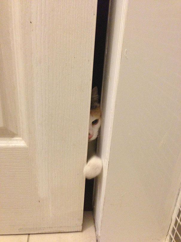 animales-pidiendo-entrar (13)