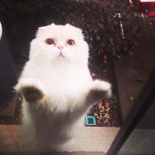 animales-pidiendo-entrar (15)