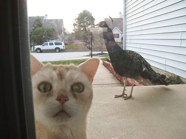 animales-pidiendo-entrar (4)