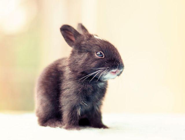 fotos-crias-conejos-creciendo (1)