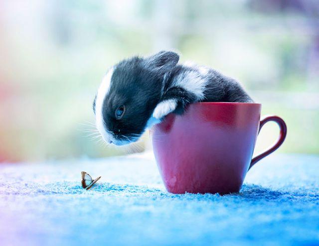 fotos-crias-conejos-creciendo (14)
