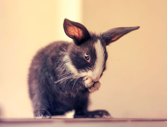 fotos-crias-conejos-creciendo (16)