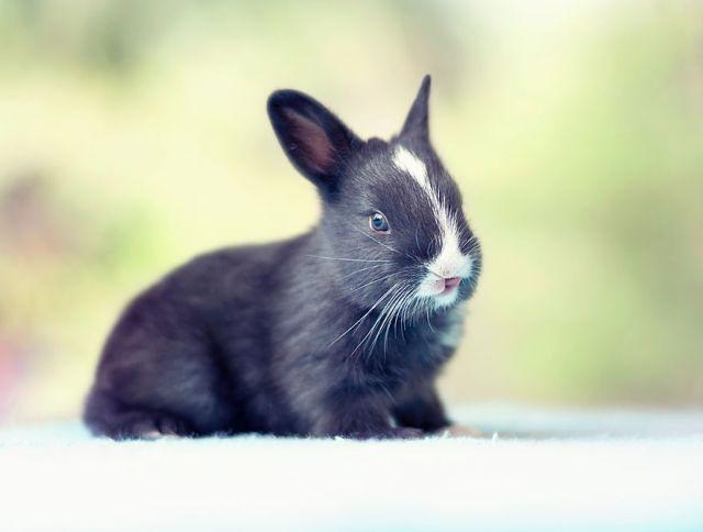 fotos-crias-conejos-creciendo (8)