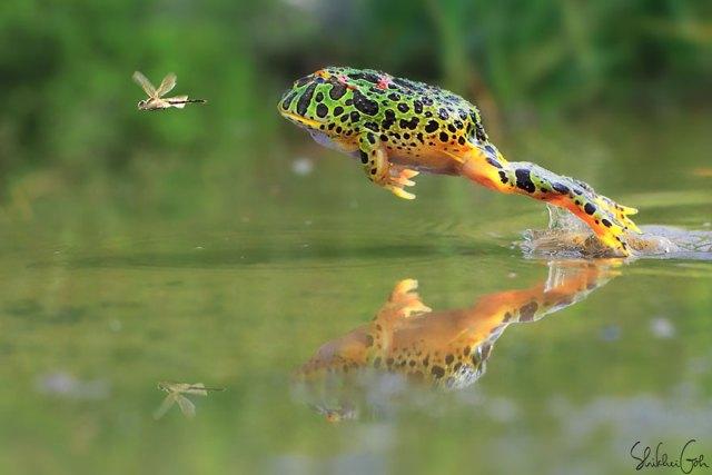 fotos-curiosas-ranas-anfibios (16)